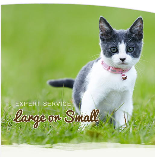Caring for Your Small Animals