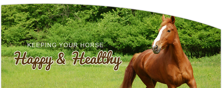 Keeping Your Horse Happy and Healthy